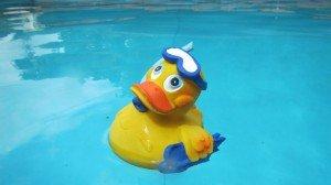 rp_duck-864706_1920-300x168.jpg