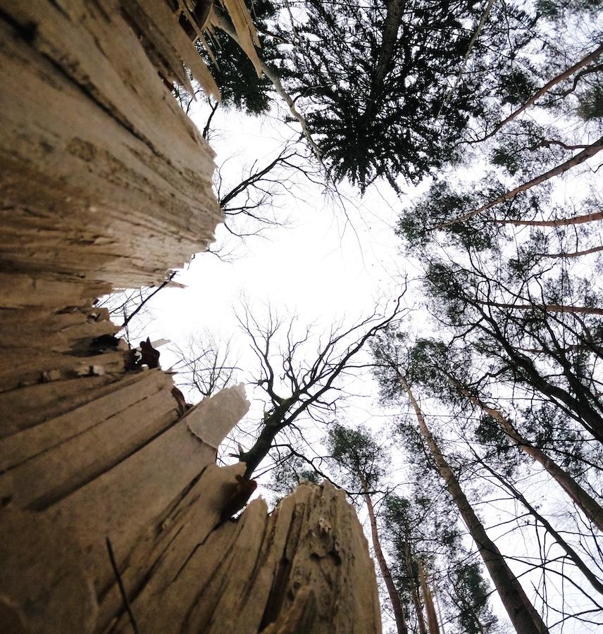 Bäume von unten