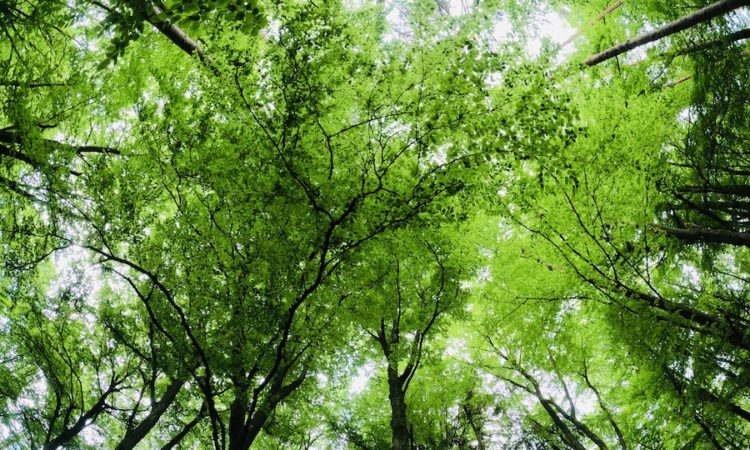 Blick im Wald nach oben