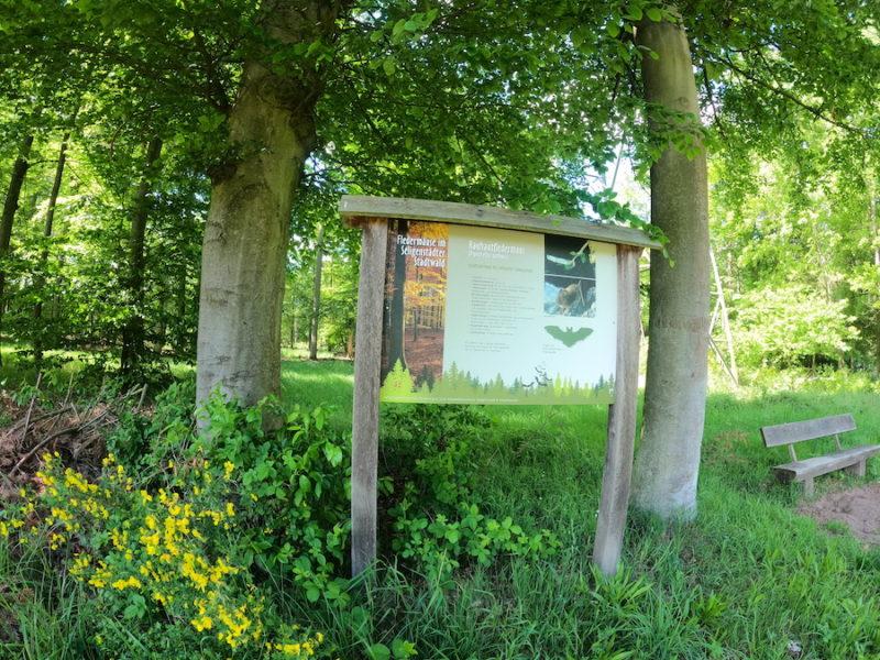 Wald bei Seligenstadt