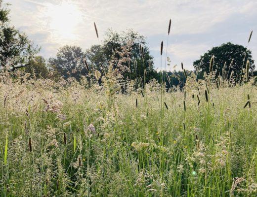 Bild von einer Wiese mit Bäumen im Hintergrund